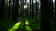 Green Forest Tracking Shot video