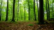 CRANE UP: Green Forest video