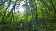 Green Forest with Douglas Fir Tree video