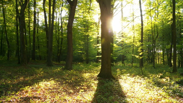 HD TIME LAPSE: Green Forest With Shadows And Sun video