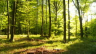 HD TIME LAPSE: Green Forest With Shadows video
