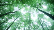 Green forest,Green leaves video