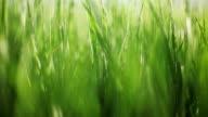 Green fresh background video