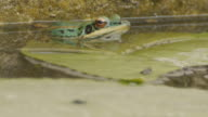 Green frog video