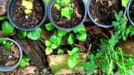 Green garden Lotus water Bowl zoom in video