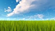 Green grass and cloudy sky spring natural background video