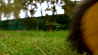 Green grass and man with lawn mower. 4K low angle slow motion shot video