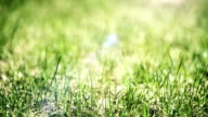 Green grass close up video