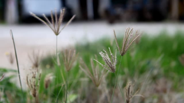 Green grass close-up video
