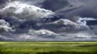 Green grass field. video
