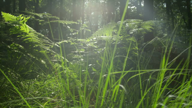 SLOW MOTION: Green grass growing in the forest video