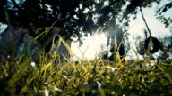 Green Grass in front of Country Home on Sunny Day video