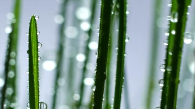 Green Grass In Rain video