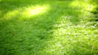 green grass in the summer park video