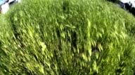 green grass slow motion video