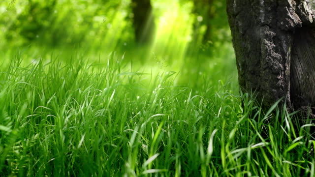 Green grass under the tree. video