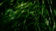 Green Grass video
