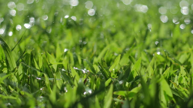 Green grass with water Spray drop on grass in the morning video