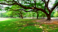 Green Grass Yards and Trees in Public Park video