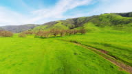 Green horse and cow pasture with orchard of old growth dormant large trees 4k stabilized aerial birds eye view tracking in toward trees with mountain and blue sky video