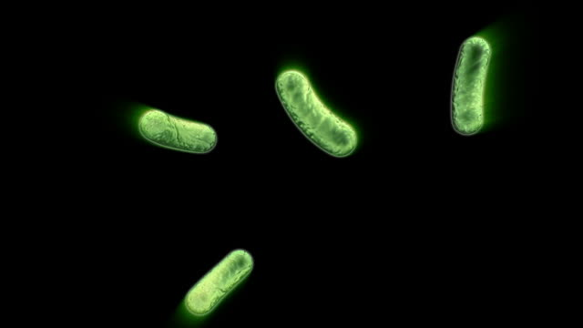 Green Infected Cells video