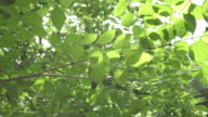 Green leaf background video