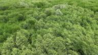 Green leaf backgrounds video