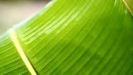 Green leaf in nature video