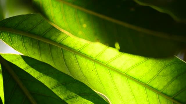 Green leaf in neture video