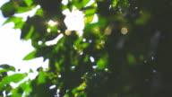 Green Leaf video