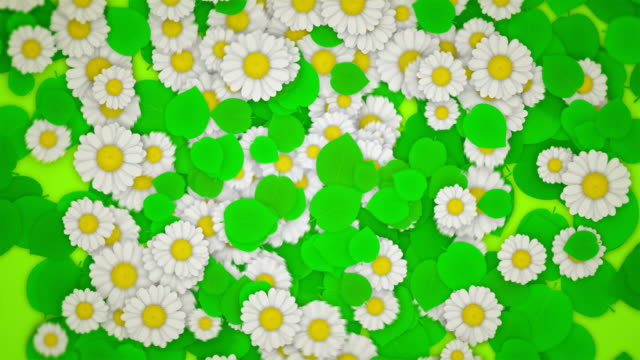 Green Leaves and Daisies (Symmetry Pull Out) video