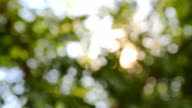 Green leaves of elm and sun beams video