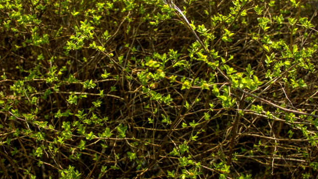 Green leaves on a spring sunny day video