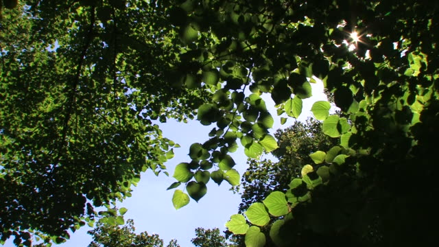Green leaves with sunlight video