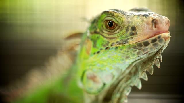 Green Lizard Green Lizard finding food video