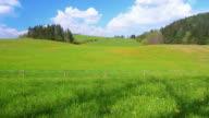 Green meadow hills in HD video