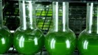 Green microalgae  containers row horizontal panning video