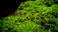 Green moss and ants video