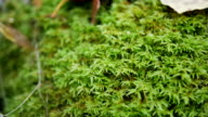 Green moss forest. Background video