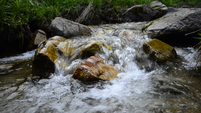 Green Mountain stream in the forrest video