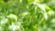 Green natural background video