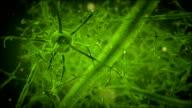 green neuron video