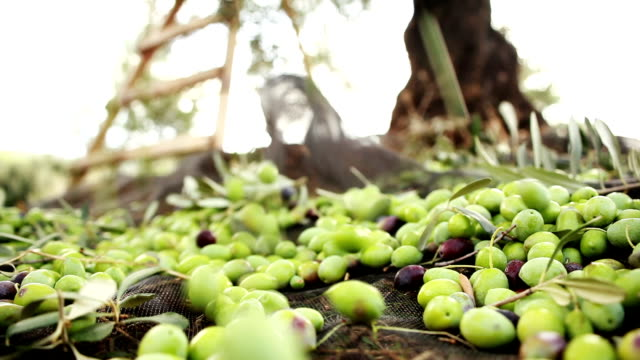 Green Olives Falling video