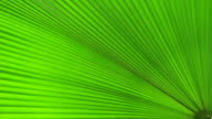 Green palm Leaf video