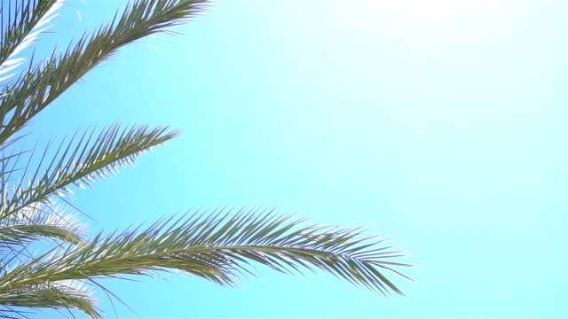 Green Palm tree amid the boundless blue sky with sunshine video