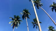 Green palm tree on blue sky background video