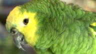 Green Parrot in a Bird Shop-007 video