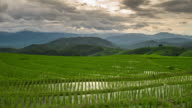 Green rice field and clouds moving in Chiang Mai, Thailand, Time lapse. video