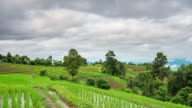 Green rice field and clouds moving in morning at Chiang Mai, Thailand, Time lapse. video