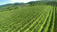AERIAL Green Rural Scene video
